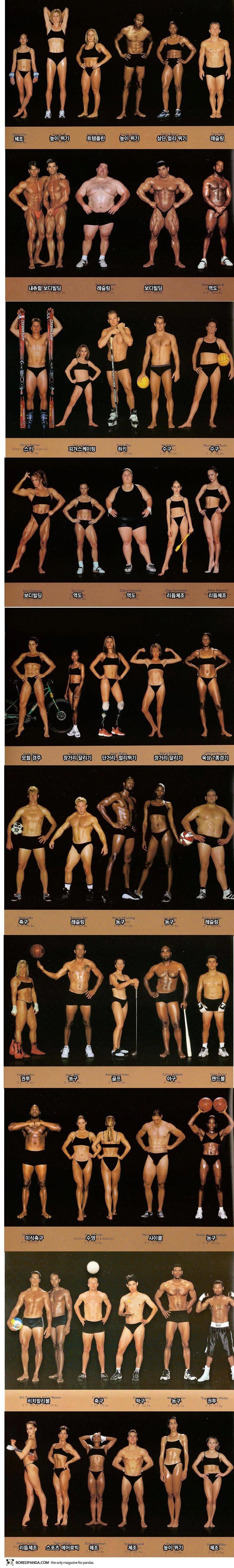 종목별 운동선수 체형