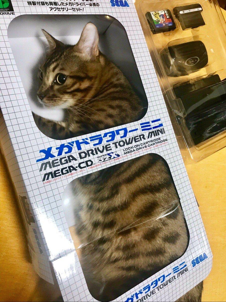 C4F45584-E741-40E6-8225-E4DA162BADCF.jpeg 고양이 학대다 vs 아니다